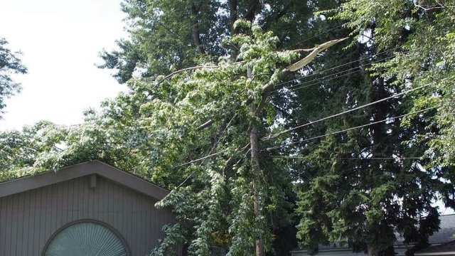 Tree limb on wire in Dearborn Heights