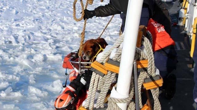 Coast Guard dog rescue 2