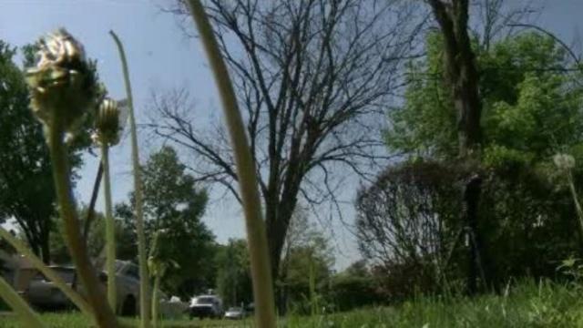 Dead tree west Detroit