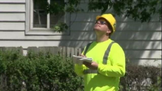 Detroit tree inspector