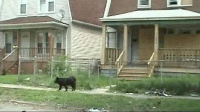 stray-dog-detroit.jpg_22062736