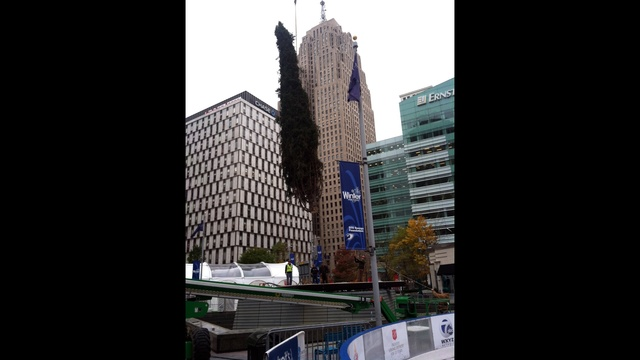 Campus martius tree upright