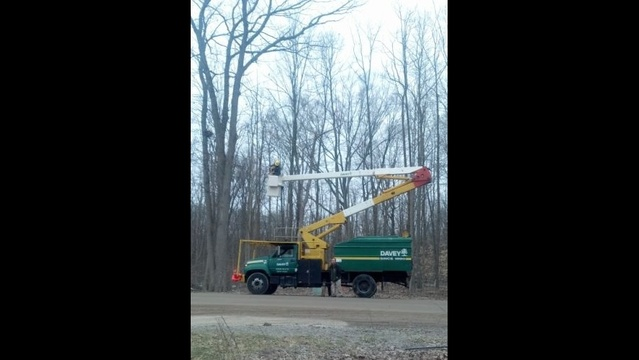 The Davey Tree Expert Company showed up with a cherry picker to save cat