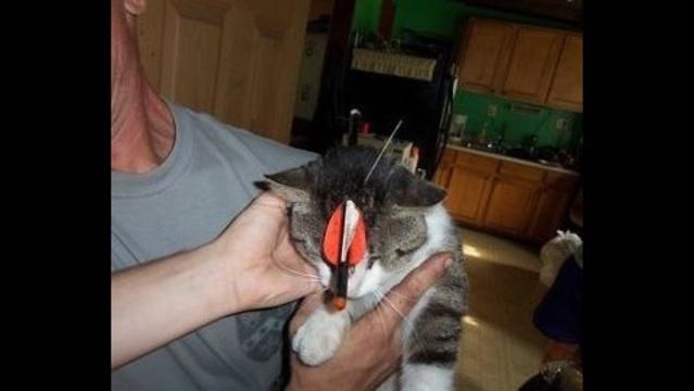 Cat-with-arrow-in-head-2.jpg_15998946