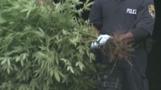 Detroit police marijuana plants raid