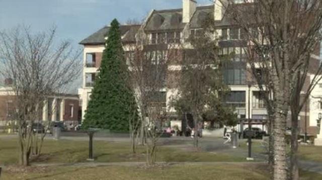 Fake treet Birmingham Michigan 2