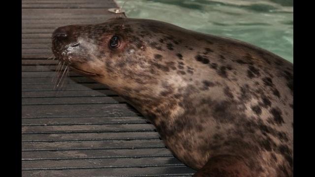Grey-Seal-pup.jpg_21883424