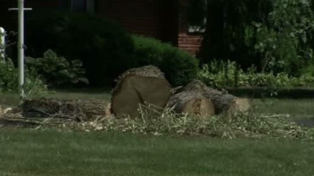 Man killed by tree trimmer Shelby Township 2