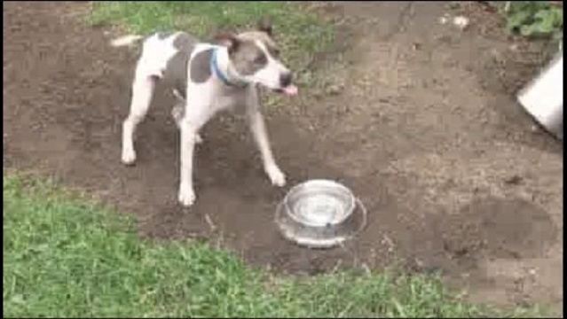Officer-Lori-Briggs-rescue-dogs-in-Detroit3.jpg_21740710