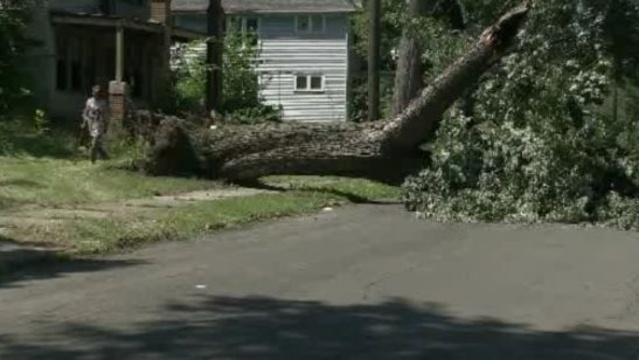Tree crushes van Detroit 1