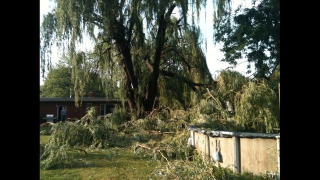 Tree down Chesterfield Township