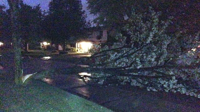 Tree down Livonia