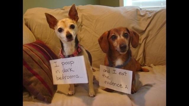 Tumblr dogs