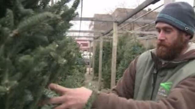 Wyatt Brewer The Plant Station Christmas trees Birmingham
