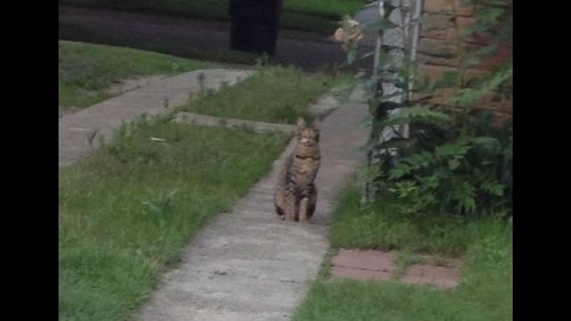 big-cat-2.jpg_21634104