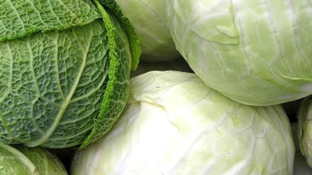 cabbage vegetables closeup