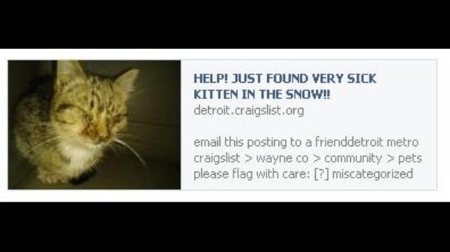 Help sick kitten