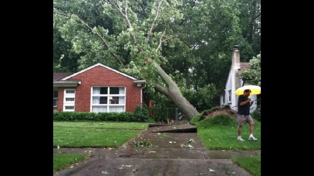 image-of-fallen-trees-in-Royal-Oak-1.jpg_21078738