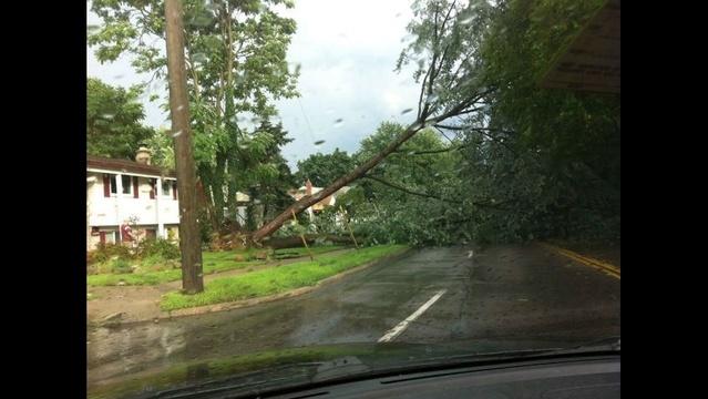 image-of-fallen-trees-in-Royal-Oak-2.jpg_21078742
