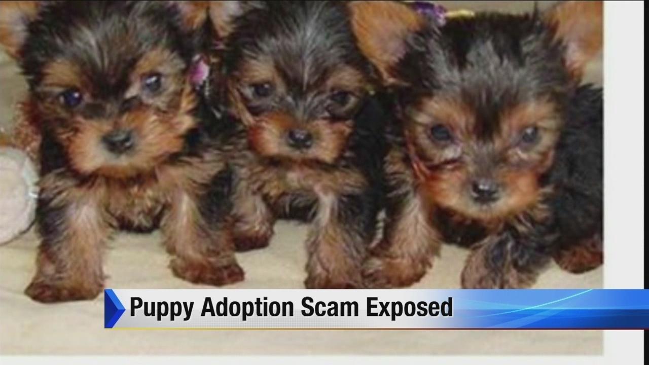 Puppy adoption scam exposed