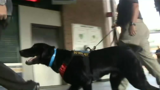 First 'Vapor Wake' canines train in Michigan