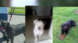 Detroit police accused of needlessly killing dogs while searching house