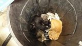 Seven cats in garbage can left at shelter in Monroe County