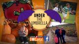 Win a Local 4 Today umbrella!
