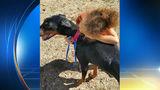 Family dog attacks, kills 4-year-old girl, mother in Sherman Township