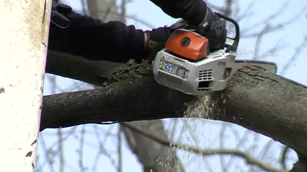 Tree Musketeers Helps Take Down Dangerous Trees In Brightmoor