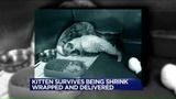 Video: Kitten Survives Being Shrink-Wrapped, Shipped 500 Miles
