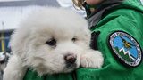 3 puppies found after avalanche give avalanche rescuers hope, 22 people&hellip&#x3b;
