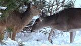 Deer breaks into dental office in Sterling Heights