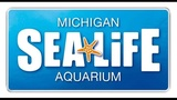 SEA LIFE Michigan holding Shark Week events beginning Sunday