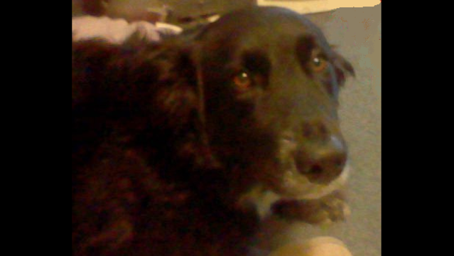 Armada teen April Millsap's dog Penny
