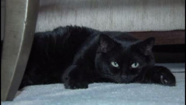 Black cat_31985268