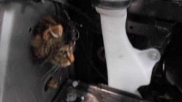 Cat-stuck-inside-car.jpg_19523438
