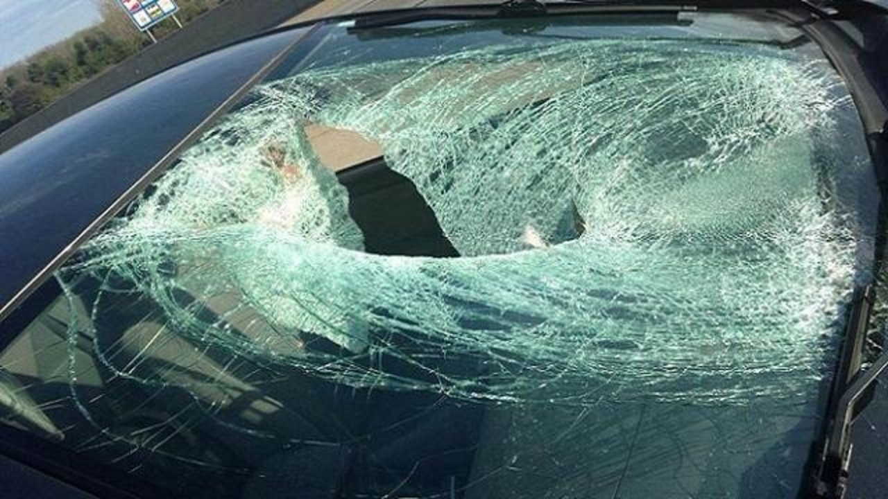 Images Goose Hit By Car On I 96 Goes Through Windshield