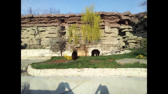 bear 4_9670550