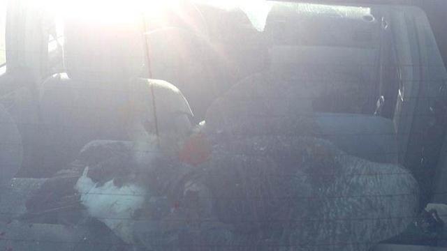 Car hits goose on I-96 1