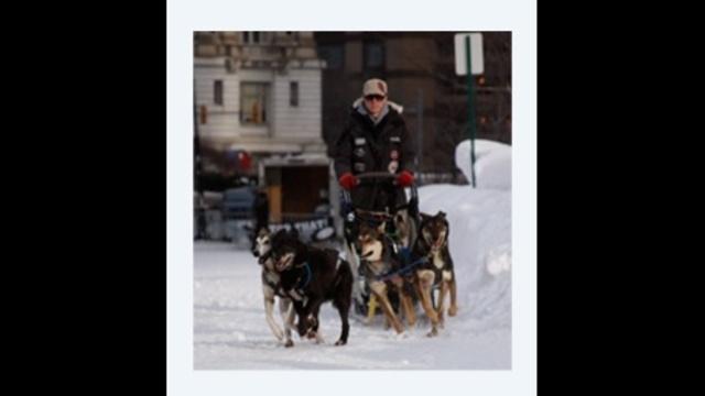 Dog sledding_24221900