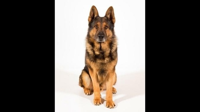 Monroe County Sheriff's Office K9 image 1