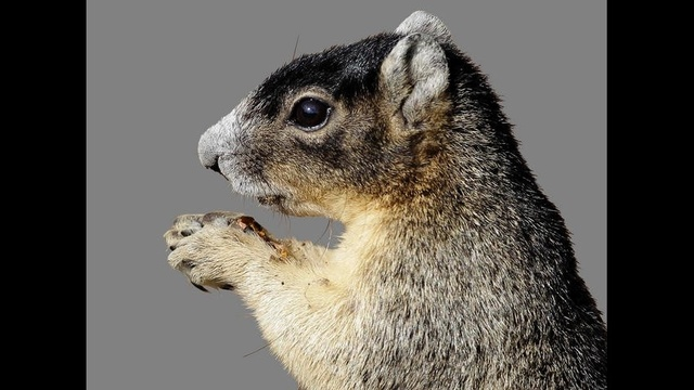 Squirrel.jpg_19169468