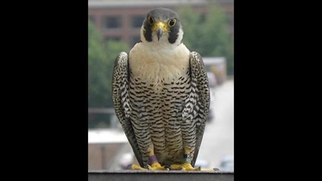 Thuderbolt the falcon_26305828