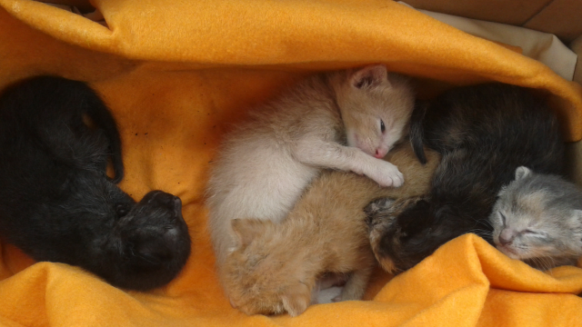 kittens need home 2