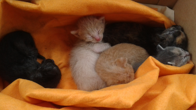 kittens need home 3