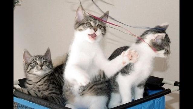 Cats-in-a-hamper-image-1.jpg_21336734