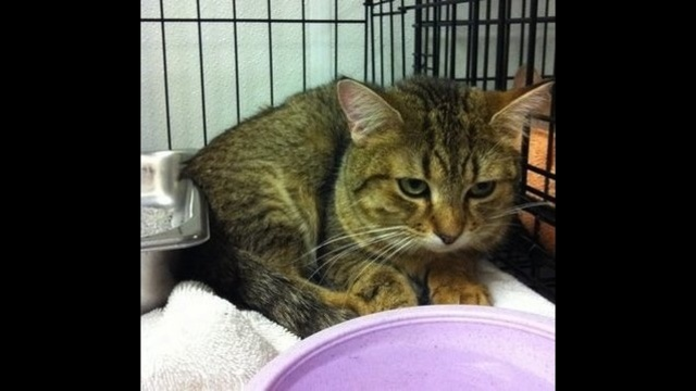 IMAGE:  One of the cats rescued from inside a Lowell home