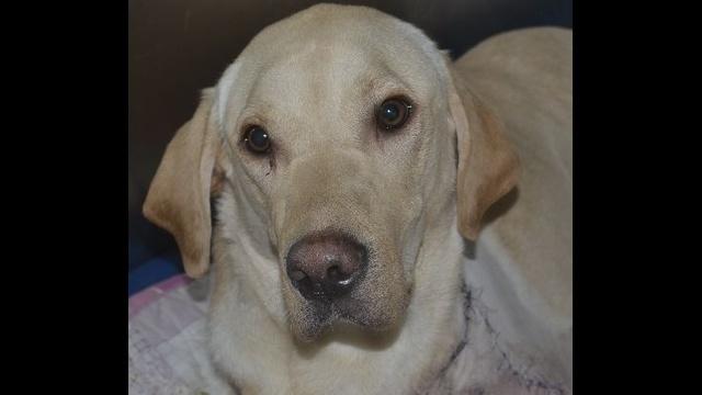 Marley-the-amputee-dog.jpg_8765054