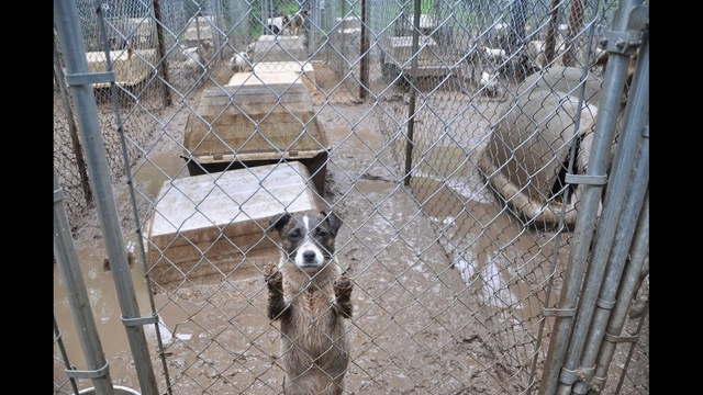 Missaukee County Puppy Mill